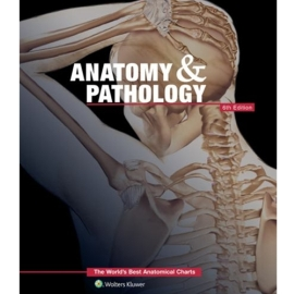 Anatomy and Pathology
