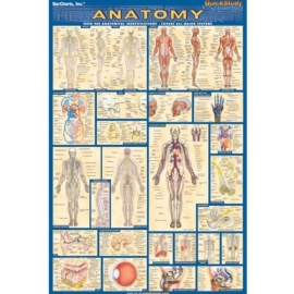 ANATOMY POSTER BARCHART LAMINATED