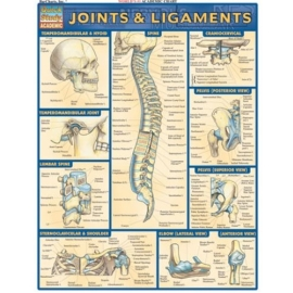 BARCHART JOINTS & LIGAMENTS CHART